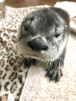 Growing up otter